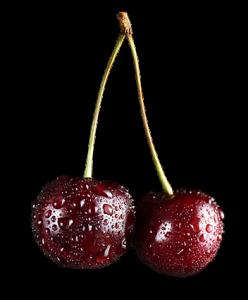 back cherries tumma kirsikka